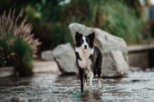 foto perro en el agua