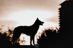 foto contraluz perro