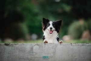 fotografía mascotas