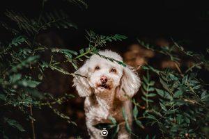 fotos perros
