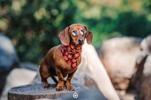 lentes para perro
