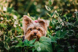 foto de perritos tiernos