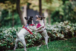 fotografía de perros